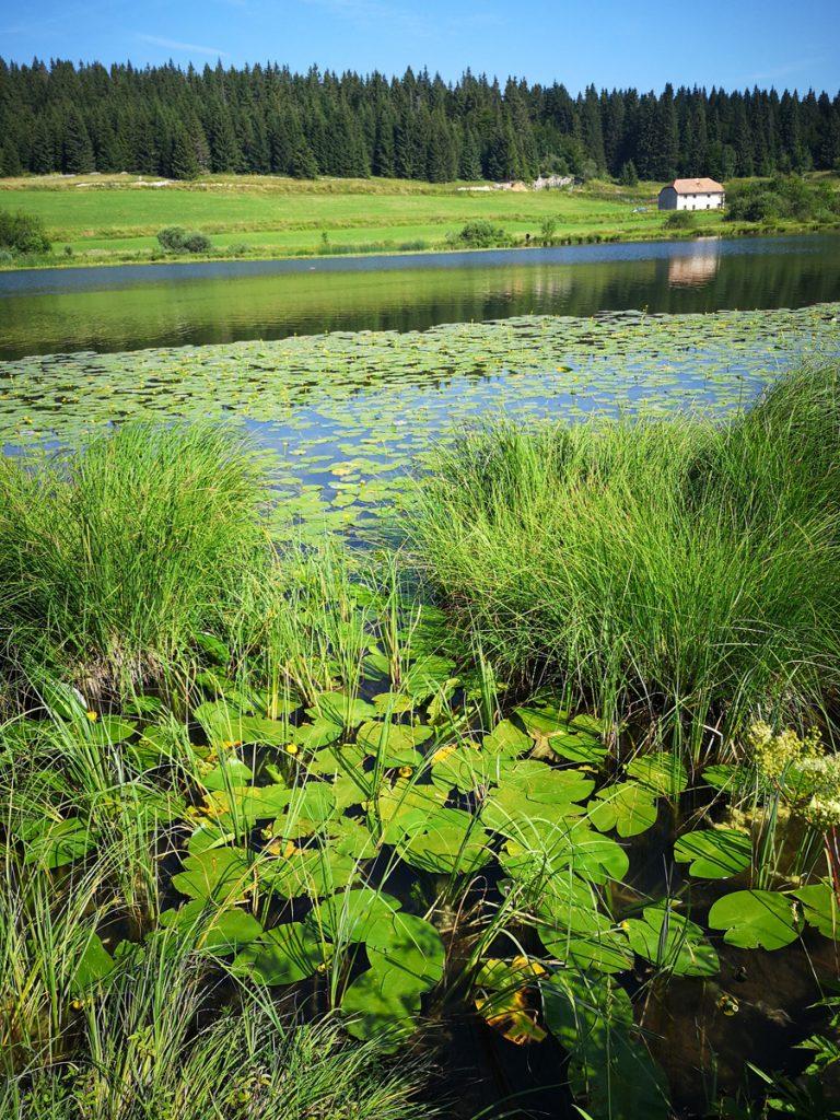 Yoga et Randonnée dans le Jura